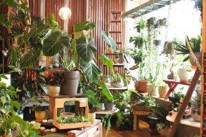 Parrish & Grove Grand Opening @ Parrish & Grove Botanicals, Saranac Commons